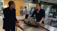 CSI: NY — s02e05 — Dancing with the Fishes