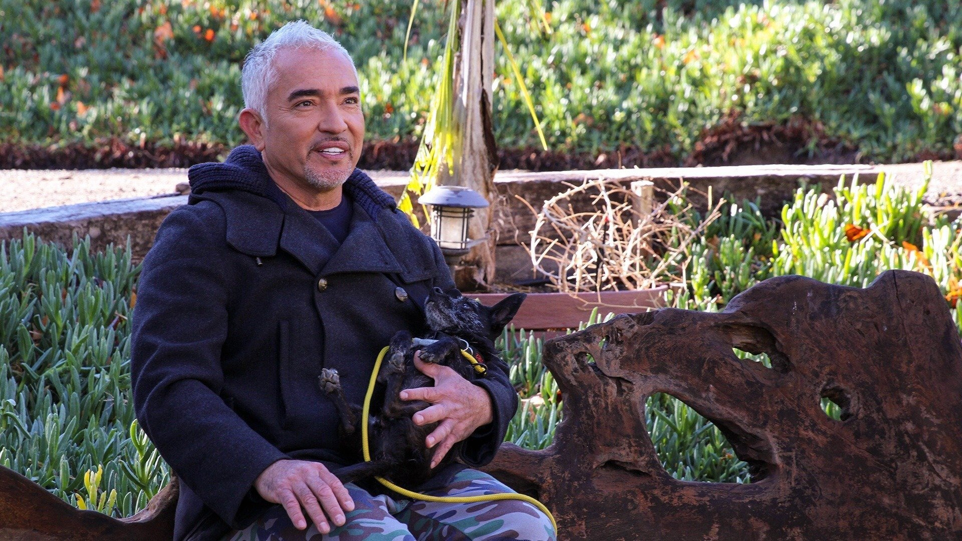 Cesar Millan: Better Human Better Dog — s01e06 — Blind Faith