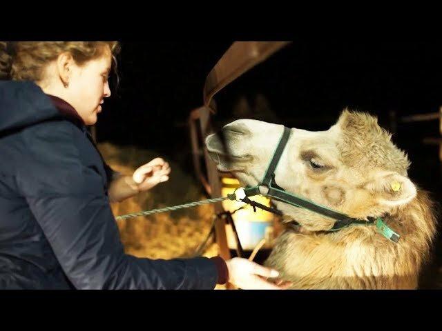 Человек на карте — s01e11 — Украли лошадей — заработаем на верблюдах