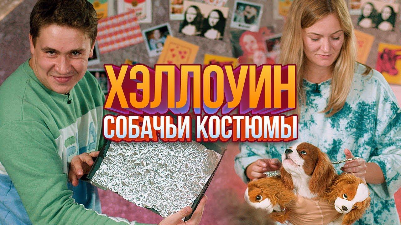 Smetana TV — s06e08 — DIY: костюмы для собак наХэллоуин