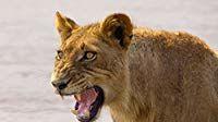Africa's Hunters — s01e05 — Teenage Pride