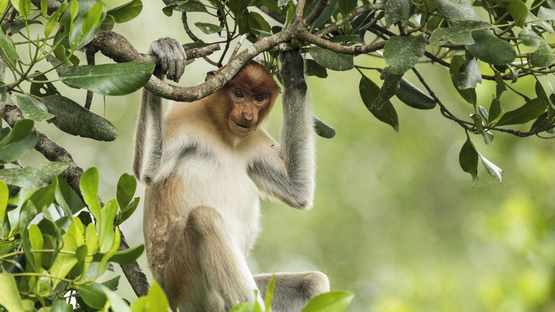 Eden: Untamed Planet — s01e01 — Borneo: Sacred Forest