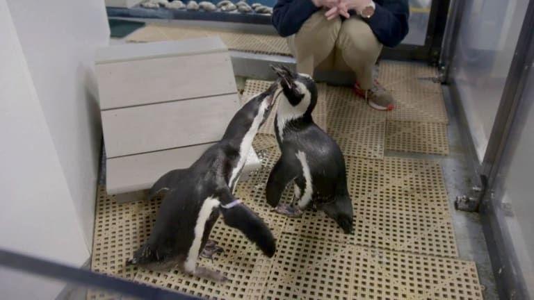 The Aquarium — s01e06 — Penguins in Love