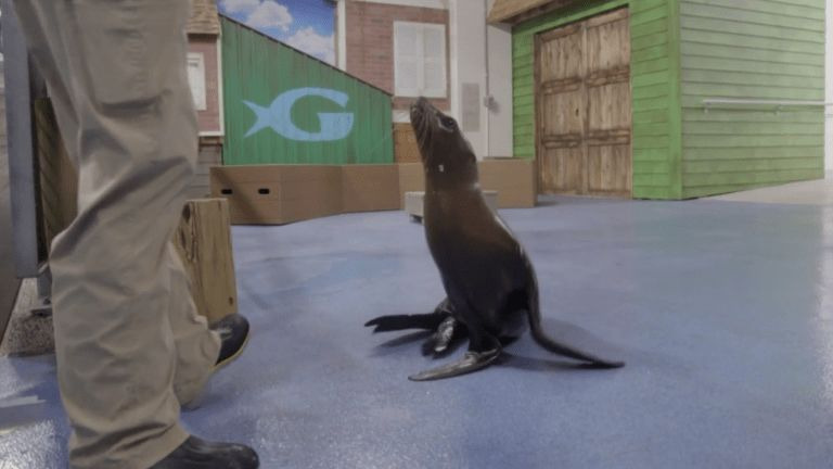 The Aquarium — s01e07 — Toddler Sea Lion Scarlett