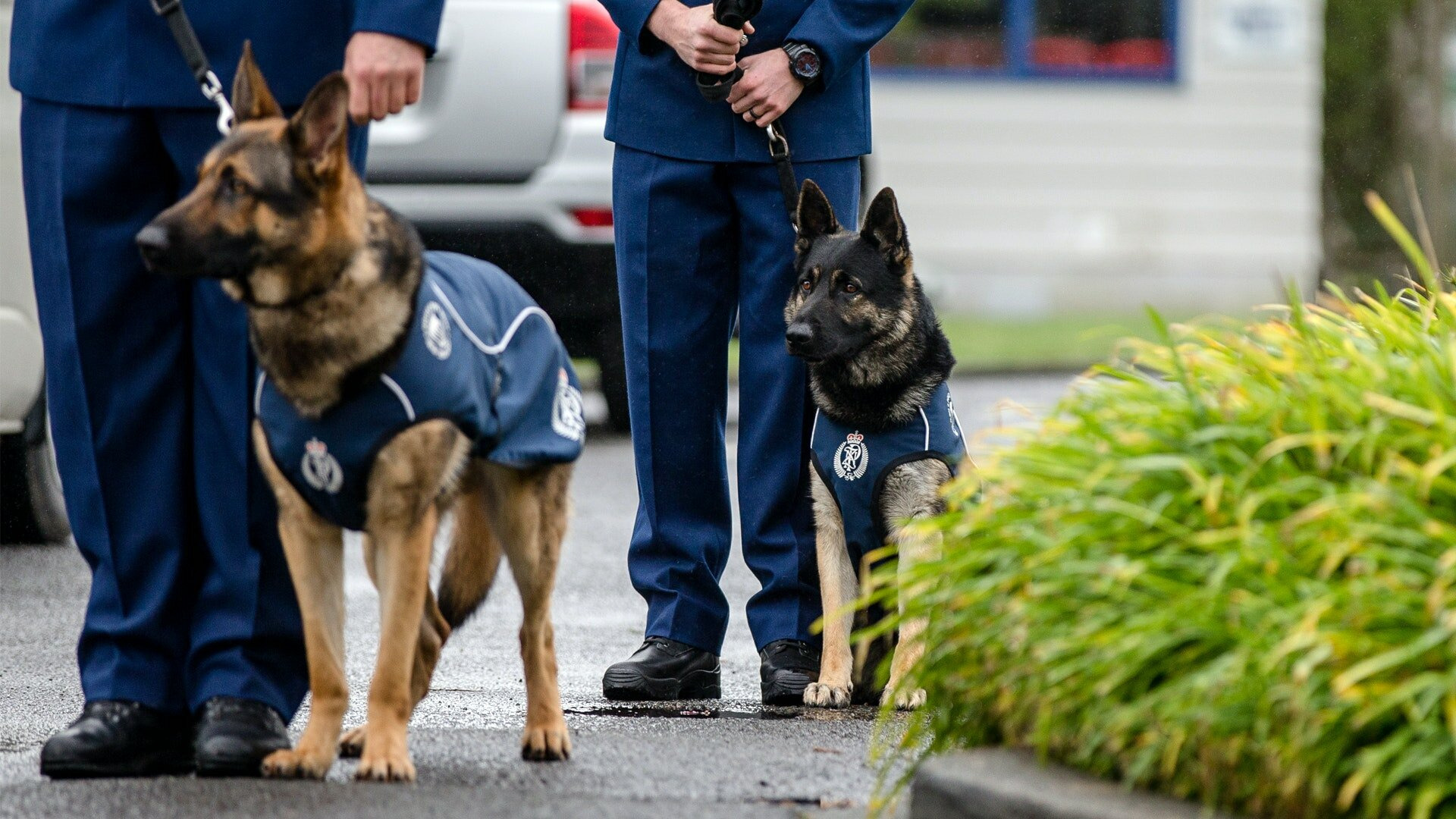 Собачий отряд: щенячья школа — s02e10 — Episode 10