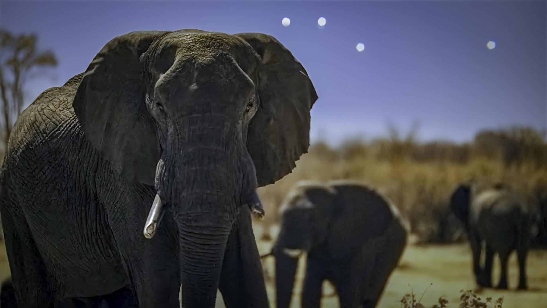 Земля ночью в цвете — s02e01 — Elephant Plains