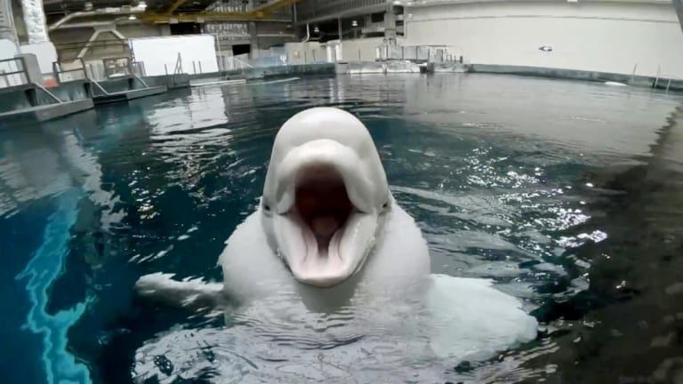 The Aquarium — s01e03 — Ready for the Jelly