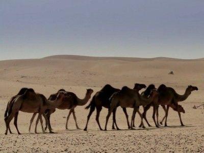 Anthony Bourdain: No Reservations — s06e19 — Dubai