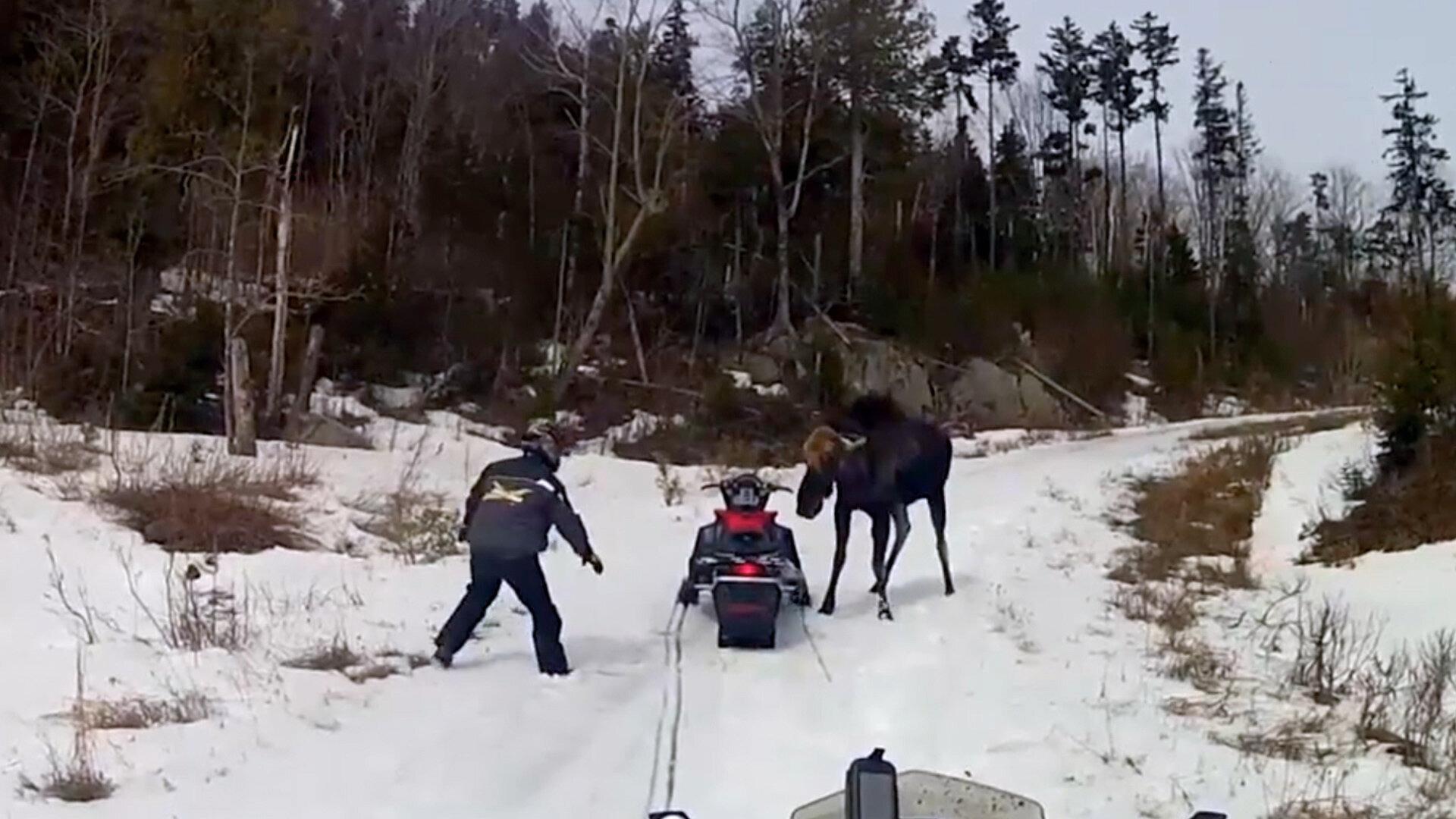 Nature Gone Wild — s01e02 — Moose Kicks and Elephant Flips