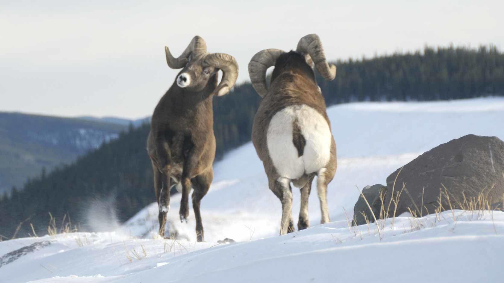 Wild Canada — s01e02 — The Wild West