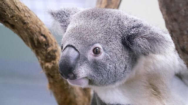 Our World — s2021e18 — Australia's Wildlife: After the Fires