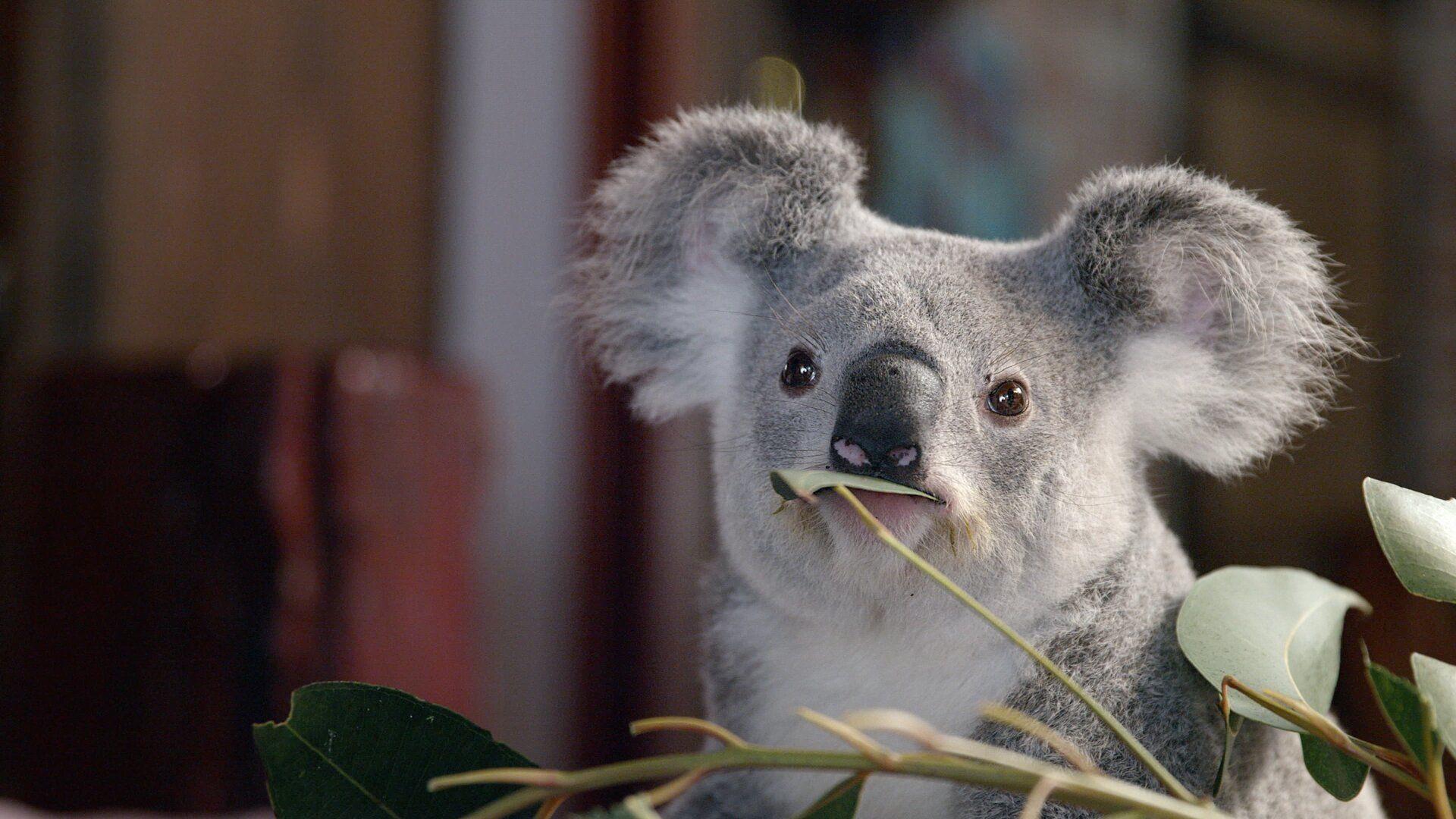 Иззи и коалы — s01e03 — Leia Has a Cold