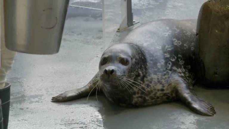 The Aquarium — s01e02 — Seal the Deal