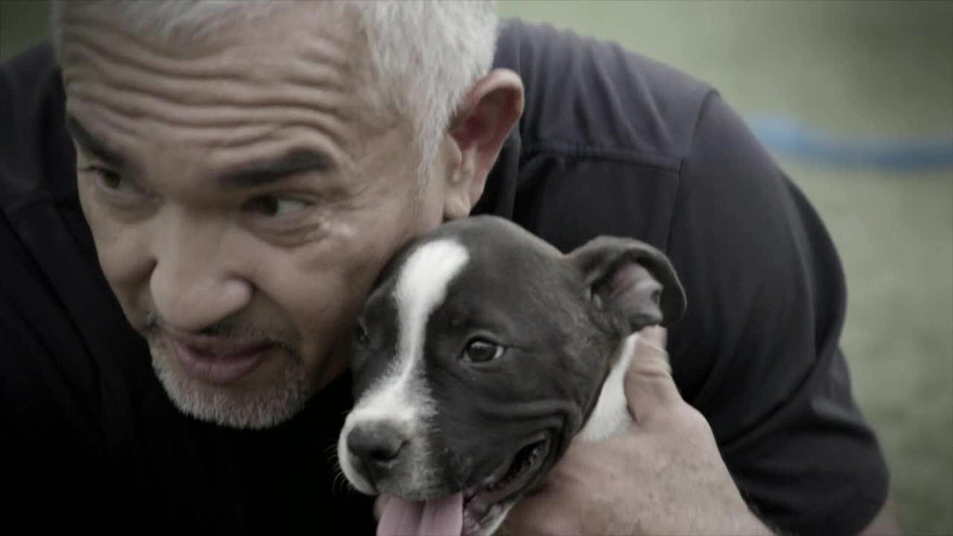 Cesar Millan: Better Human Better Dog — s01e01 — Fit For Service