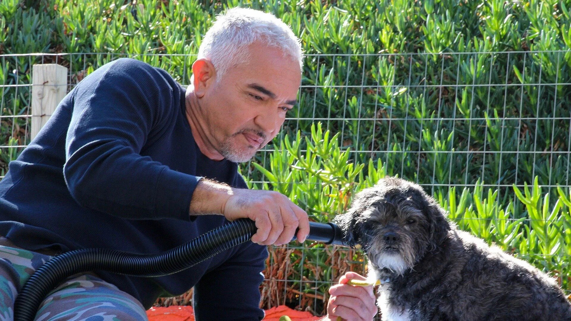 Cesar Millan: Better Human Better Dog — s01e10 — Hijacked Pack