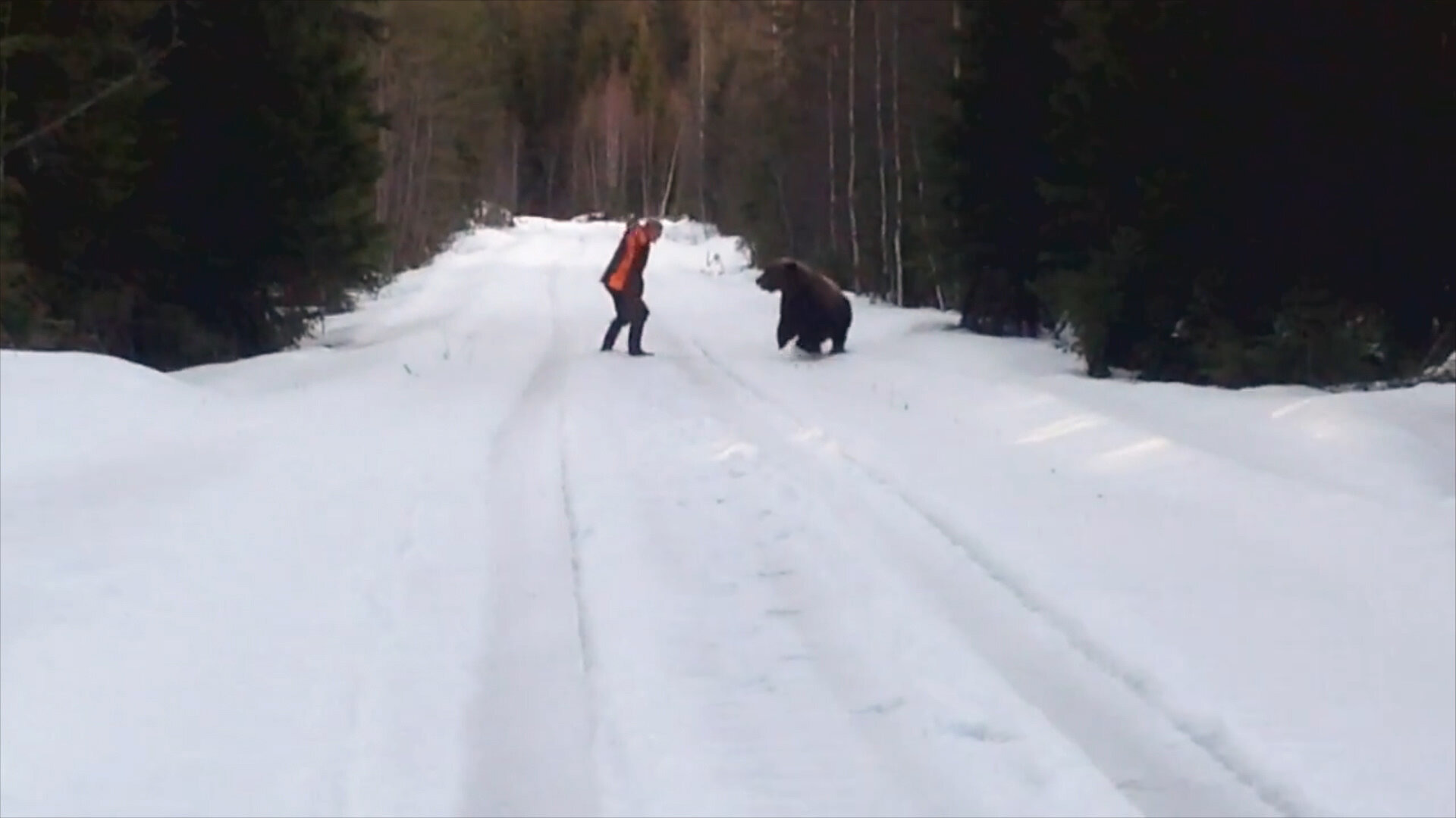 Nature Gone Wild — s01e07 — Scare The Bear