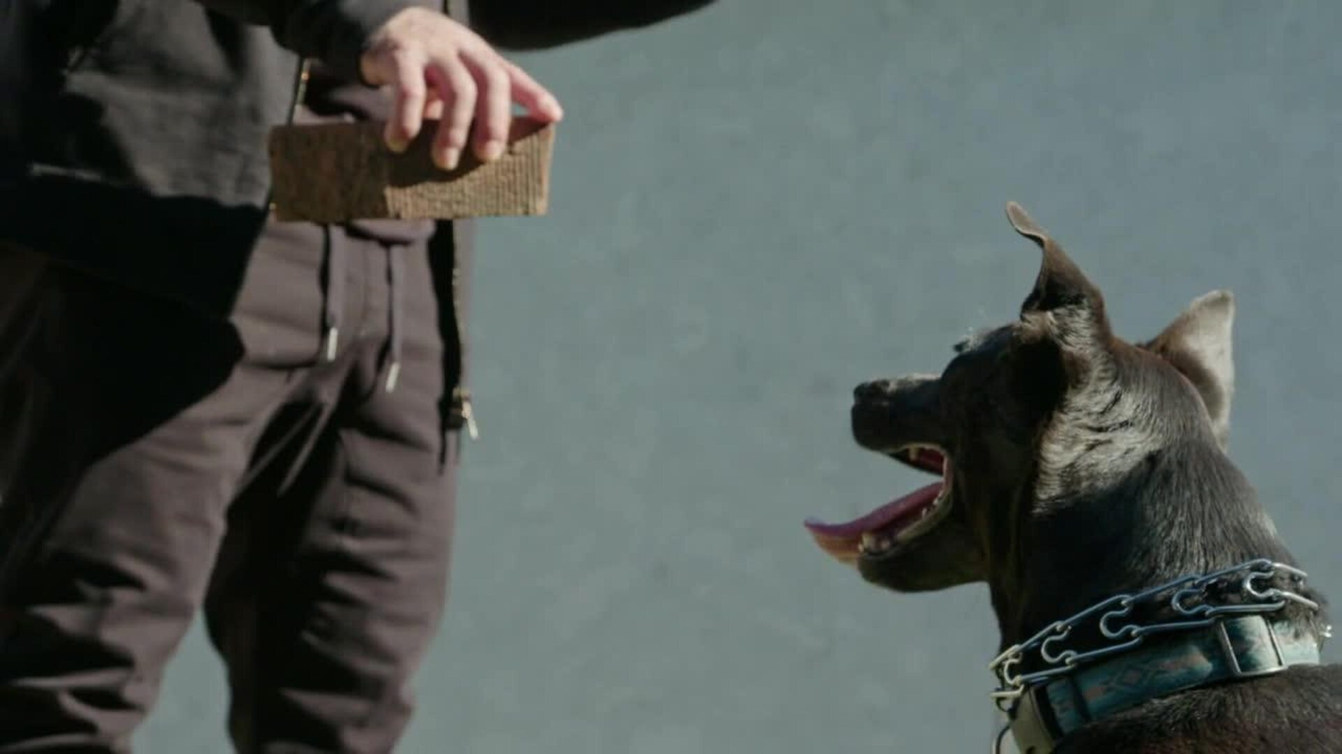 Cesar Millan: Better Human Better Dog — s01e02 — One Brick at a Time
