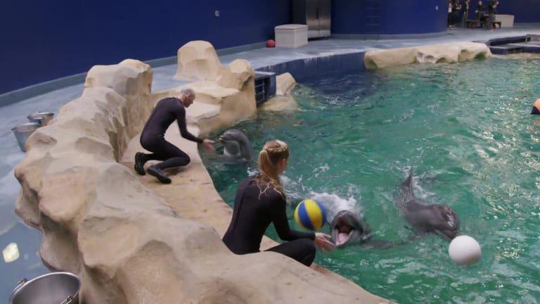 The Aquarium — s01e09 — Dolphin Doctor