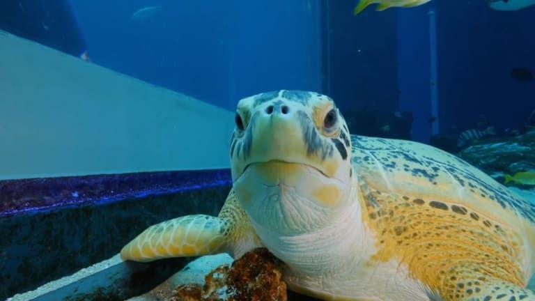 The Aquarium — s01e01 — Slimy is the New Fuzzy