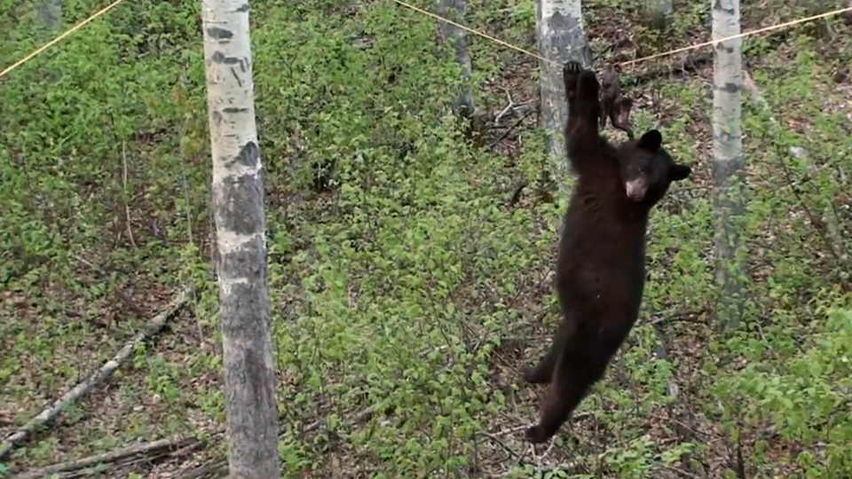 s01e06 — Bear On A Wire