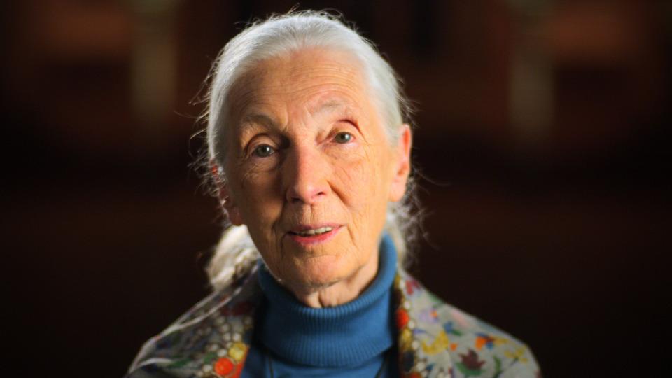 s01e07 — Jane Goodall