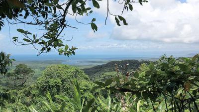 s01e04 — The Rainforest
