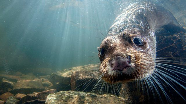 s37e05 — Supercharged Otters