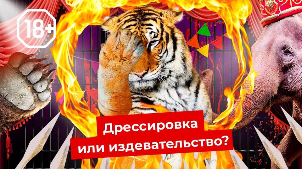s05e118 — Шоу для извергов: цирки идельфинарии нужно запретить | Как страдают животные