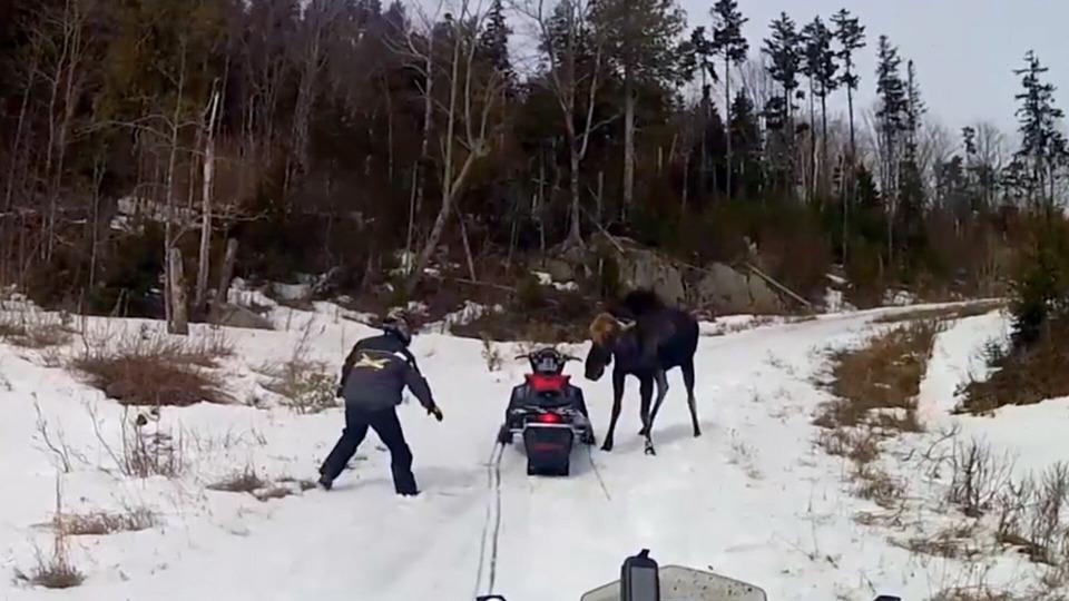 s01e02 — Moose Kicks and Elephant Flips