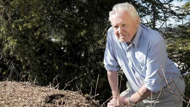 s37e08 — Attenborough and the Empire of the Ants