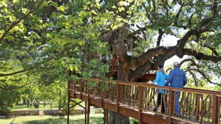 s07e01 — Bon-Appé-Treehouse