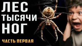 s03e00 — Лес тысячиног. Страшные истории наночь. Криповые истории, про пауков.