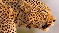 s01e02 — A Leopard's Last Stand