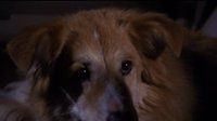 s03e20 — All Dogs Go to Heaven
