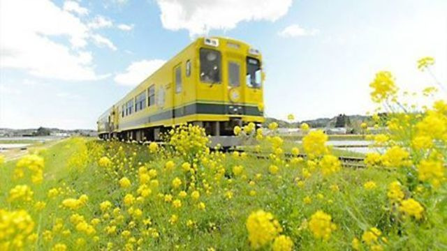 s2014e14 — A DAY-TRIP FROM TOKYO PT.2 Slow Train in Springtime Chiba