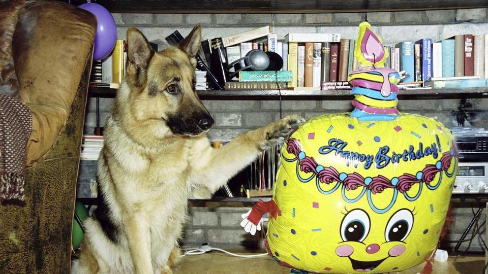 s08e10 — Happy Birthday