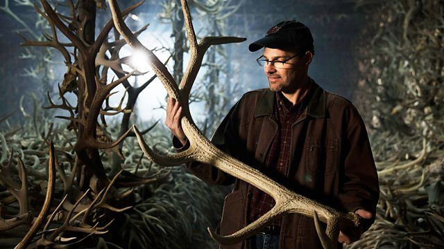 s37e03 — Nature's Wildest Weapons: Horns, Tusks and Antlers