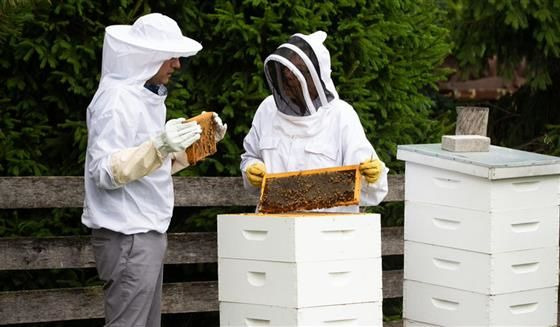 s07e07 — Beekeeping