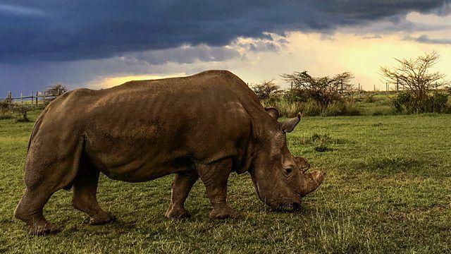 s37e06 — Sudan: The Last of the Rhinos