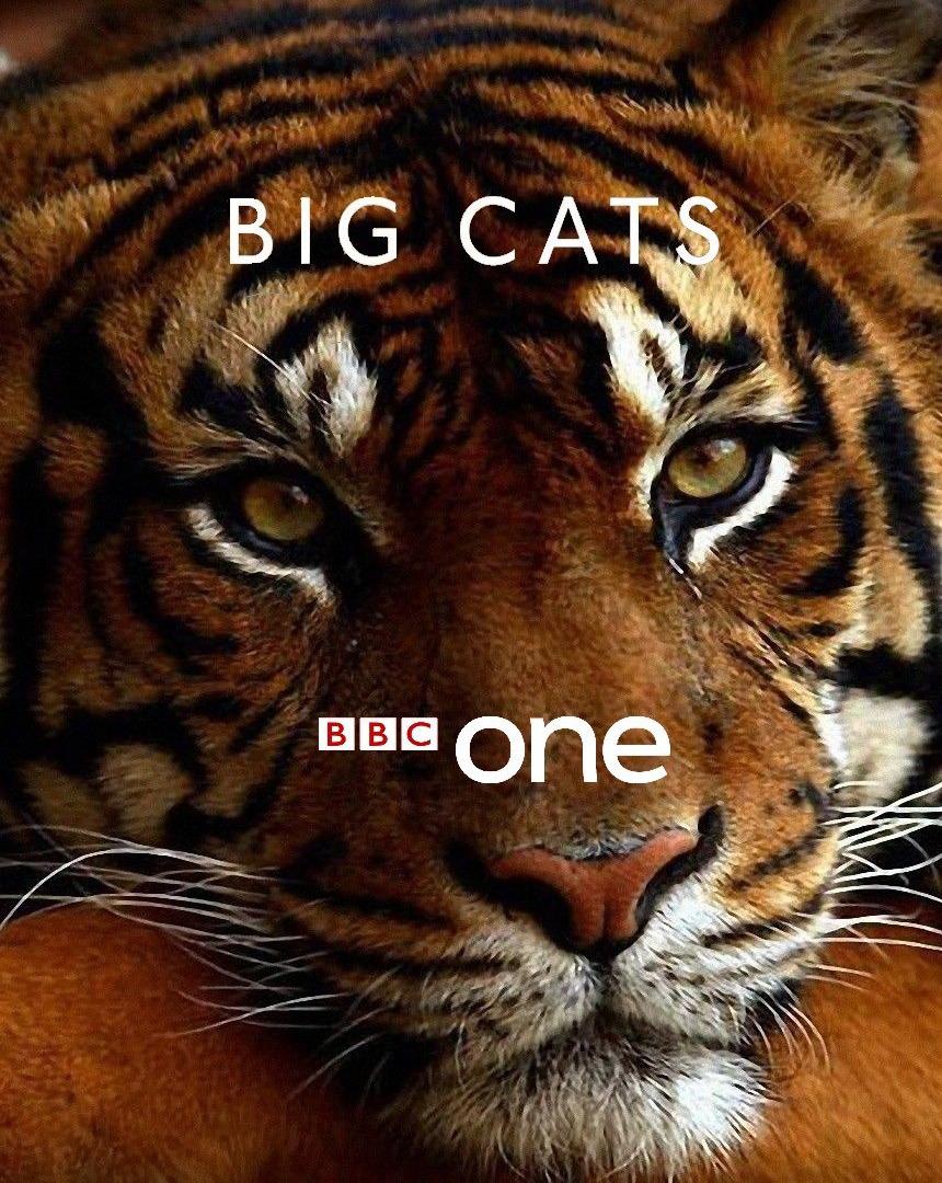 Show Big Cats