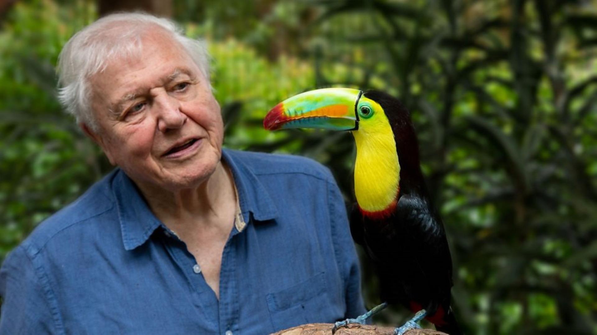 Show Attenborough's Life in Colour