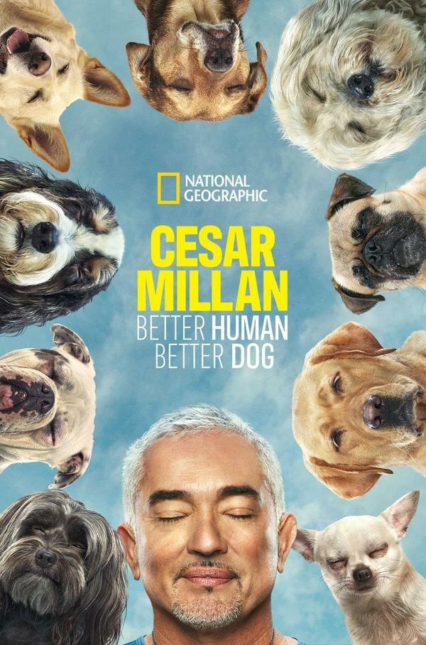 Сериал Cesar Millan: Better Human Better Dog