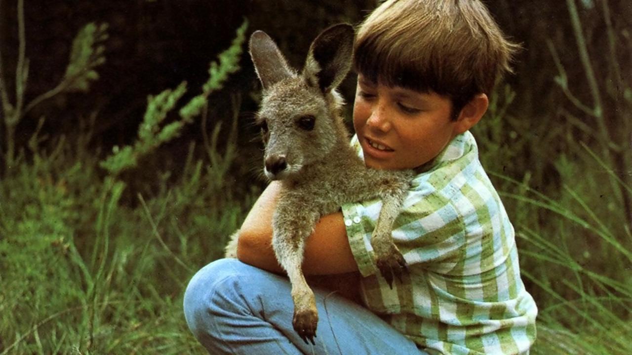 Show Skippy the Bush Kangaroo
