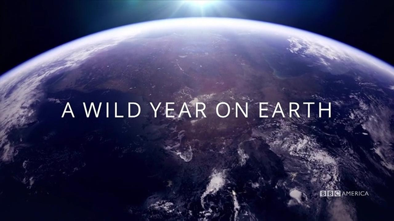Show A Wild Year on Earth