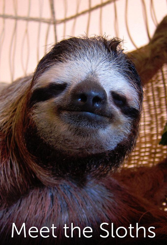 Show Meet the Sloths