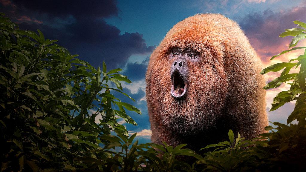 Сериал 72 самых опасных животных Латинской Америки