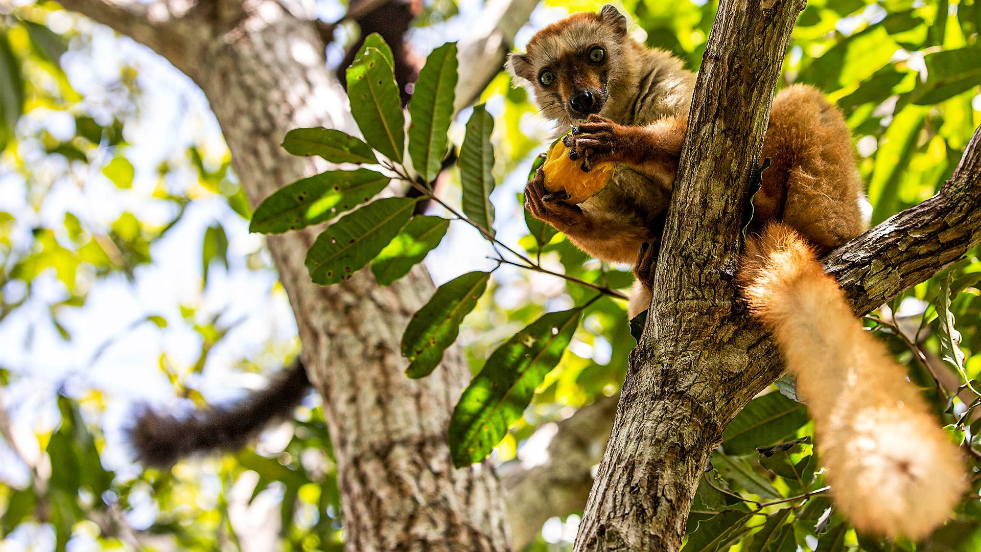 Show Primates