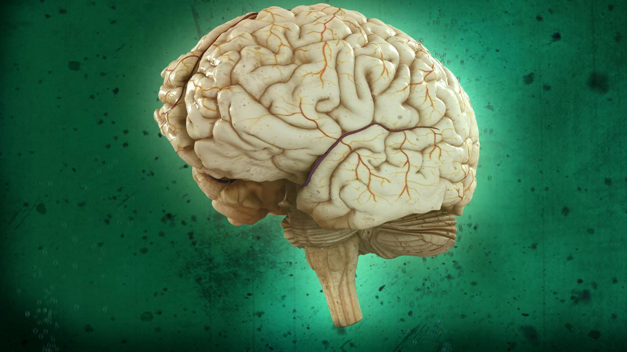 Show Brain Games