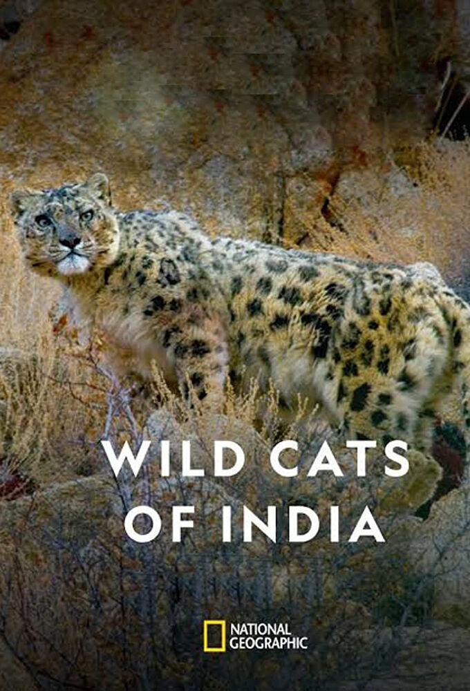 Show Wild Cats of India