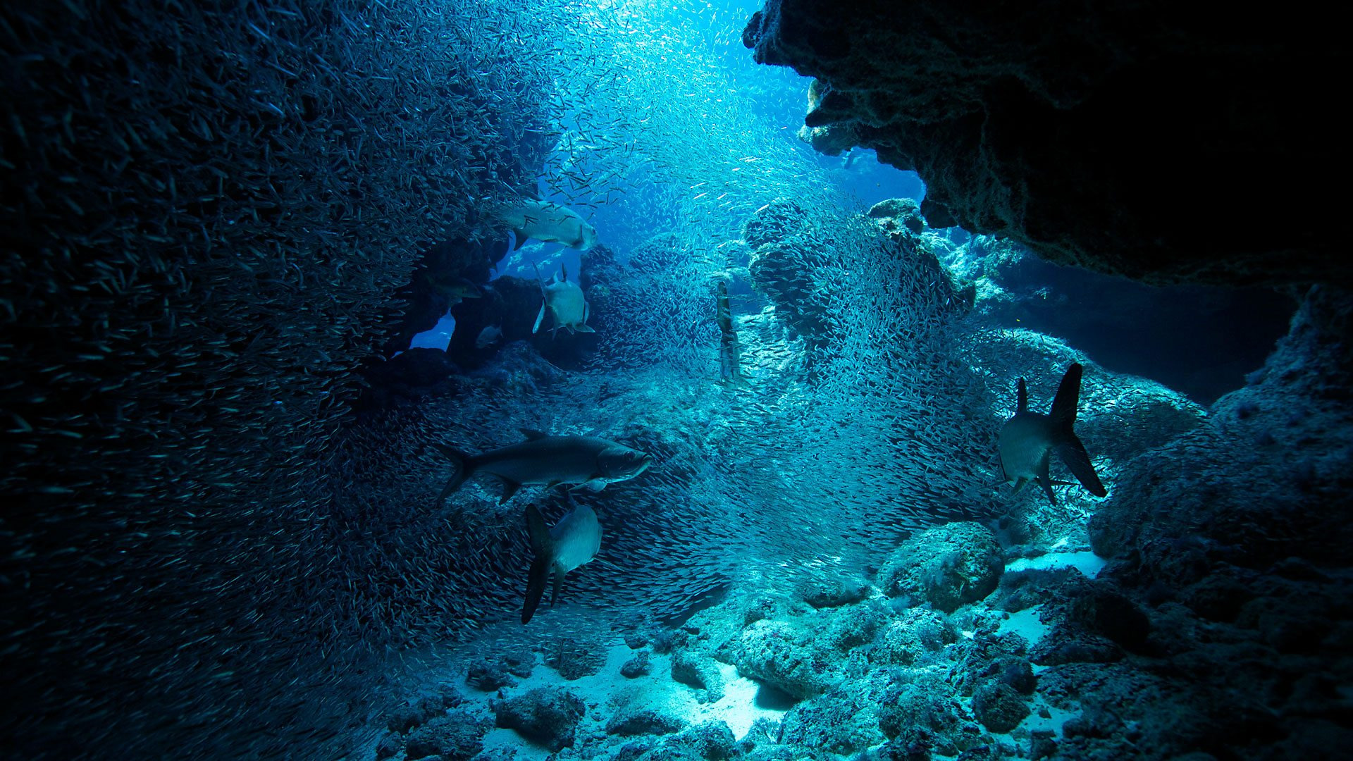 Show Atlantic: The Wildest Ocean on Earth